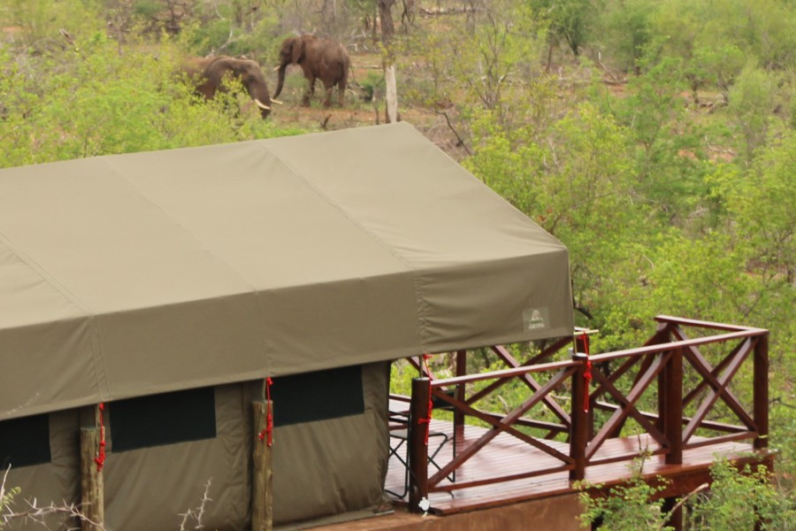 pic-11-suite-tente-view-on-elephants
