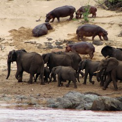 pic-44-bis-riviere-olifants-a-balule